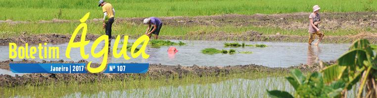 Plantação de arroz em Arari (MA) - Zig Koch / Banco de Imagens ANA