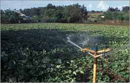 Irrigação em Itaipulândia - Zig  Koch / Banco de Imagens ANA
